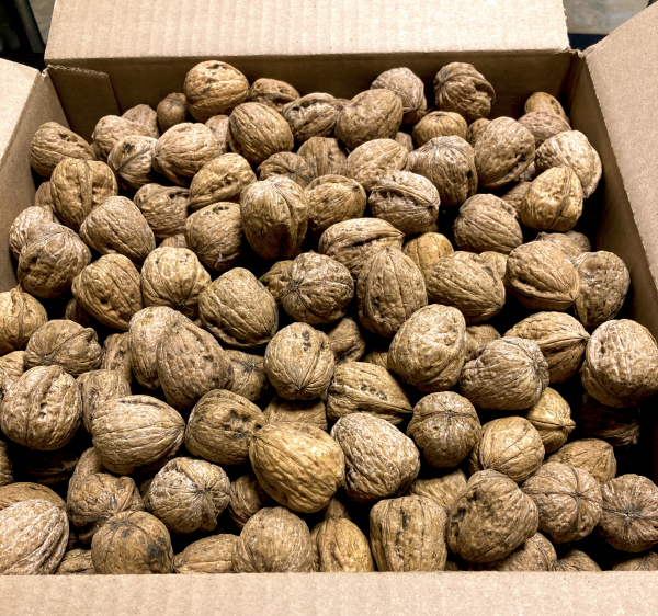 10lb Box of Walnuts In-shell